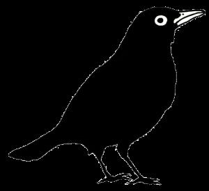 bird-trans